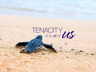 Tenacity Is Where It's At Image